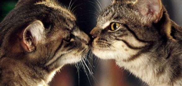 15 fatti da non credere sui nostri amici gatti - foto: clicforum