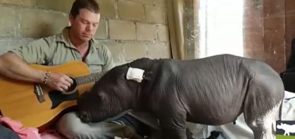 Photo abandoned baby rhino being serenaded to sleep screen capture from YouTube/Care for Wild Rhino Sanctuary