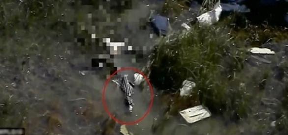Cadáver de um piloto é devorado por jacaré