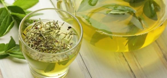 Té verde, el mejor aliado para combatir el cáncer (imagen de publimetro.pe)