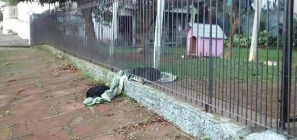 A cadelinha mostrou toda sua solidariedade canina ( Reprodução - Facebook )