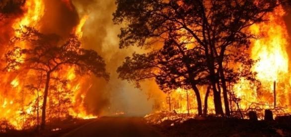 Tutta l'Italia va in fiamme: il web chiede aiuto