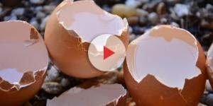 Uova contaminate presenti anche in Italia