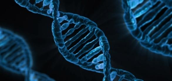 CRISPR-Cas9 is an innovative gene modification technique. Photograph courtesy of: PublicDomainPictures/Pixabay