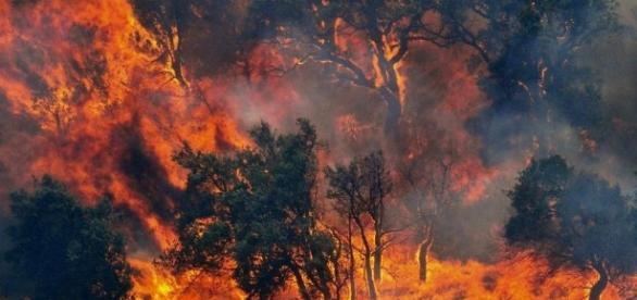 Regione Campania, una delle più colpite dagli incendi insieme a Sicilia e Calabria.