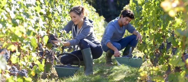 All'Italia il primato dell'agricoltura BIO