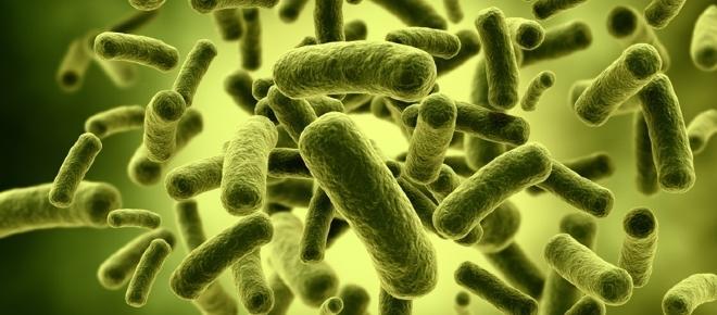 Sclerosi multipla: un batterio nell'intestino 'migliora' il quadro neurologico