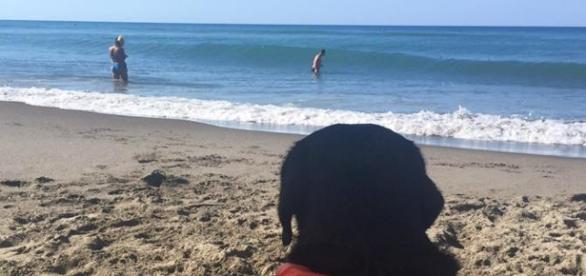Era di vedetta in spiaggia a controllare i bagnanti il labrador Lux quando a Palinuro ha salvato dalle onde una bimba di 8 anni. Foto: Facebook.