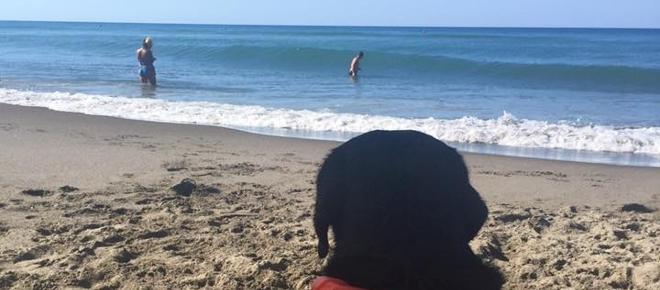 Palinuro, il cane bagnino Lux salva una bambina di 8 anni dall'annegamento