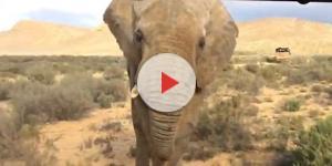 Elefante ataca caminhão com turistas na África (Foto internet)
