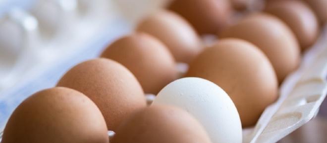 Cosa rischia chi mangia uova contaminate dall'insetticida?