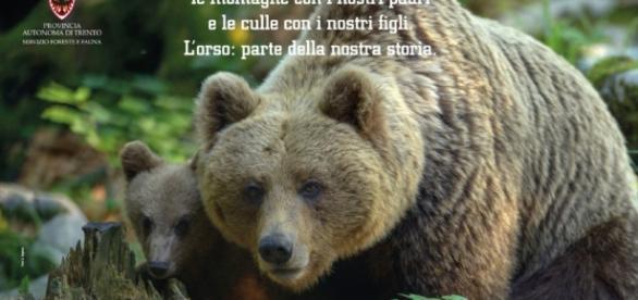 L'uccisione dell'orsa KJ2 ed lo sconvolgente piano della Regione Trentino