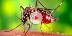 Zika Virus arrivato in Italia?