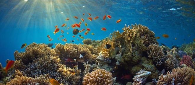 Algas de laboratorio frente al cambio climático