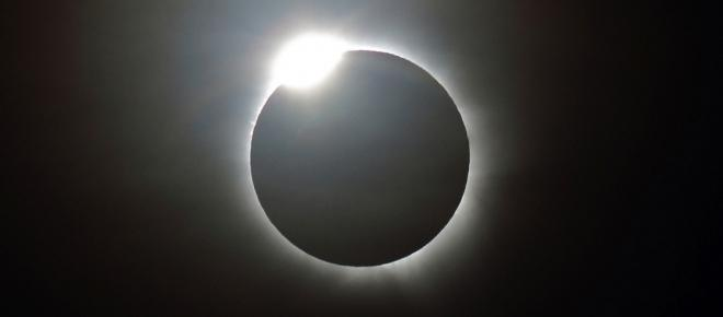 How do plants and animals react during a total solar eclipse?