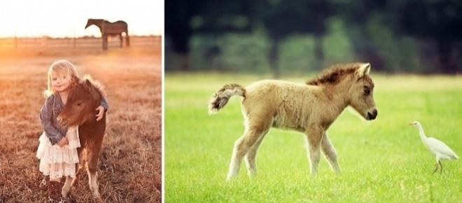 Saiba mais sobre os mini cavalos e se encante com eles