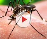 Caso di virus Zika a Bologna: scattano le misure preventive