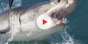 Tubarão deixa banhistas desesperados, em praia nos Estados Unidos