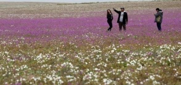 Flores surgiram fora de época e encantaram turistas e pesquisadores (EPA)