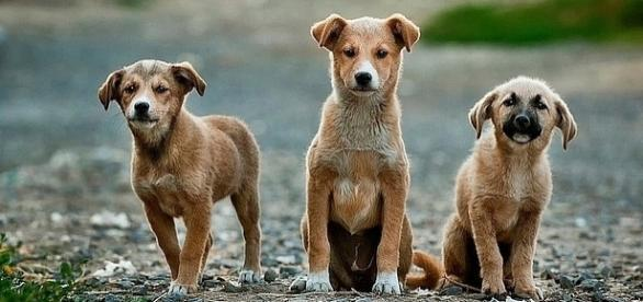 National Dog Day is August 26 [Image: pixabay.com]
