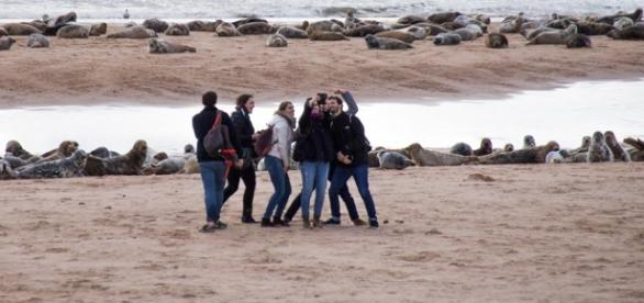 Selfie culture is not more important than wildlife whatever these people in Aberdeenshire might think. Lee Watson Ythan Seal Watch