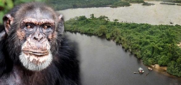 Sie wurden bei Tierversuchen vergiftet und ausgesetzt - Die Insel ... - bild.de