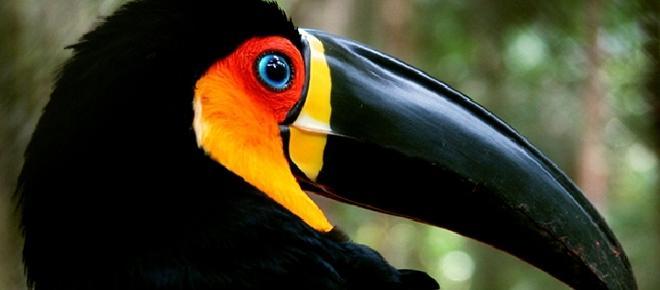 O site das aves, para observadores e cientistas