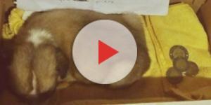 Foto do cãozinho, sua carta e algumas moedas