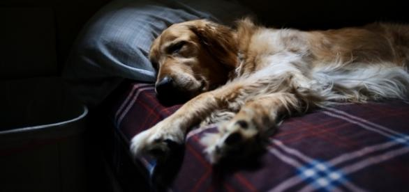 Study says having a dog in your bedroom helps sleep | Image Credit: Pixabay