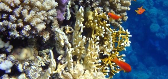 Coral Reefs - Image Credit: Dino van doorn / Wikimedia