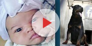 Cachorro ataca bebê de 27 dias em Mogi das Cruzes