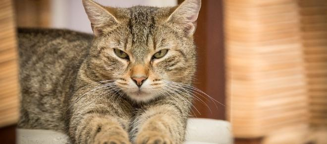 Beware of cats! Experts find link between cat parasites, neurological disorders
