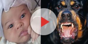 Mãe deixa bebê com cão feroz e o que encontra é terrível