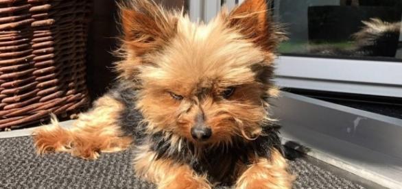 Brüggen: Einbrecher entkommt mit Familienhund Susi - rp-online.de