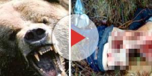 Ursos acabam fazendo refeição com homem