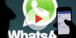 WhatsApp, evitare truffe collegate alla famosissima app di messaggi