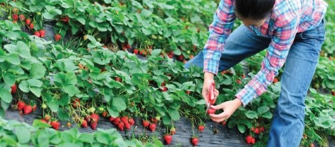 Spania: Sute de locuri de muncă în agricultură pentru români