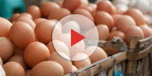 Cagliari, allarme Fipronil: ritirate migliaia di uova a rischio ... - castedduonline.it