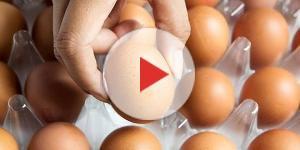 Uova contaminate da insetticida pericoloso: lotti e marca da controllare
