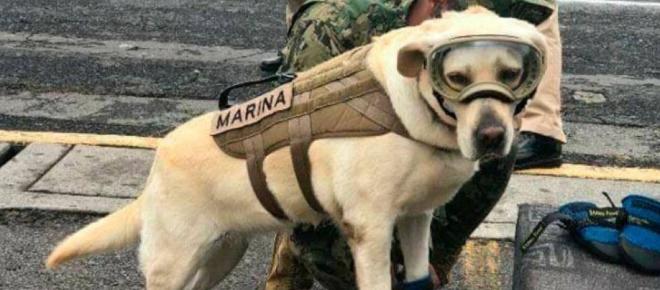 Frida, la perrita que está salvando vidas debajo de los escombros