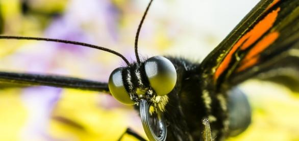 A news study discovered that insect vision is far clearer than previously thought. Image source: Pixabay