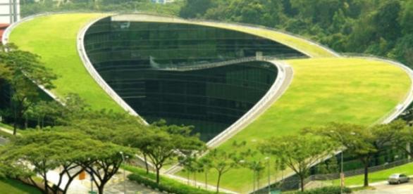 Telhados verdes agregam qualidade de vida