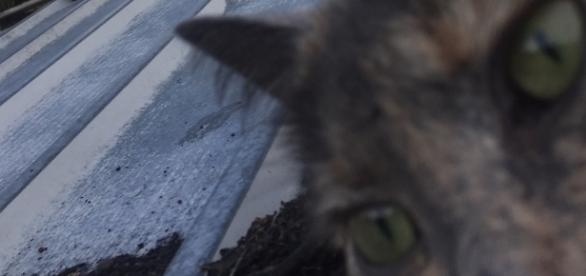 Grey Cat Selfie on Shed Roof - source Facebook