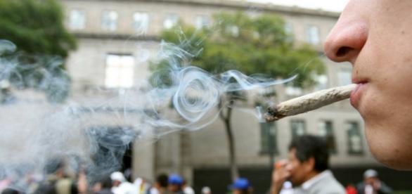 Marihuana legal, un sueño lejano.