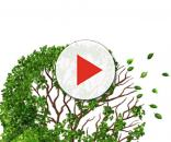 Alzheimer la memoria che ci abbandona