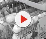 Funghi e batteri intasano le lavastoviglie: ecco cosa fare per ridurre i rischi alla salute