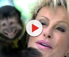 Ana Maria fala sobre a morte dos macacos