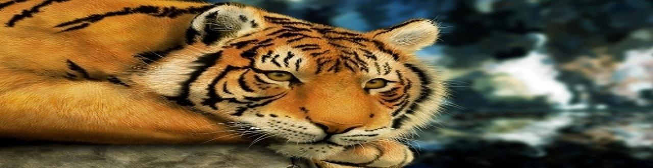 Les animaux sont des êtres complexes et multicellulaires dont on peut en séparer les espèces en groupes homogènes.
