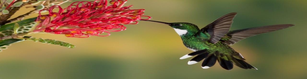 A natureza em poesia visual quer retratar todo sentido que podemos perceber da foto destacada. Inscreva-se no canal!