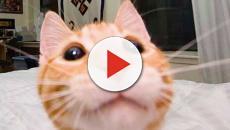 Gatti, quanto sono bravi a giocare a ping pong?
